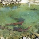 Ancotage-Yachtclub-Sharks_2.JPG