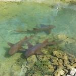 Ancotage-Yachtclub-Sharks_4.JPG