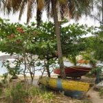 Bequia_Colours_6.JPG