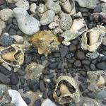 Conch-Beach_1.JPG