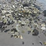 Conch-Beach_4.JPG