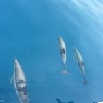 Delfin-Show_05.JPG