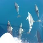 Delfin-Show_14.JPG