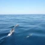 Delfin-Show_17.JPG