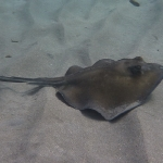 Diving-Vanora_01.JPG