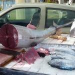 FishMarket_1.JPG