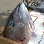 FishMarket_2.JPG