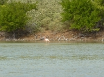 flamingo_09