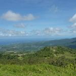 Green_Martinique_2.JPG