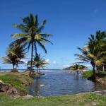 Green_Martinique_6.JPG