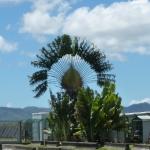 Green_Martinique_8.JPG
