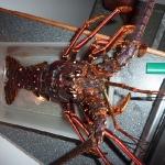 LobsterDinner_Bagalut_2.JPG