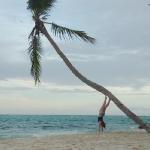 Palm_climbing_4.JPG