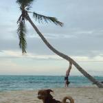 Palm_climbing_5.JPG
