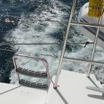 Sail-again_02.JPG