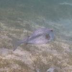 Salinebay_underwater_1.JPG