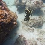 Salinebay_underwater_3.JPG