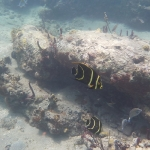 Salinebay_underwater_4.JPG