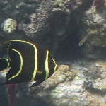 Salinebay_underwater_5.JPG