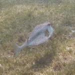 Salinebay_underwater_6.JPG