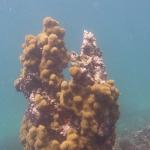Sandy_Snorkeling_08.JPG