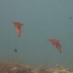 Sandy_Snorkeling_09.JPG