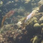 Sandy_Snorkeling_10.JPG