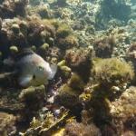 Sandy_Snorkeling_13.JPG