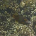 Sandy_Snorkeling_14.JPG