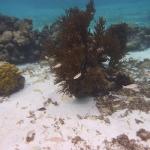 Snorkel_Cays_2.JPG