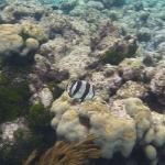 Snorkel_Cays_4.JPG