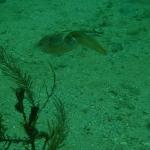 Snorkel_Cays_7.JPG