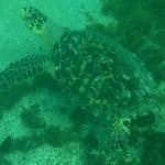 Snorkel_Cays_8.JPG
