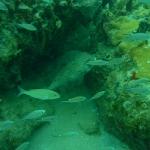Snorkel_Cays_9.JPG
