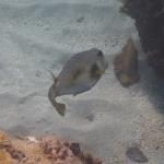 Snorkel_Purina_03.JPG