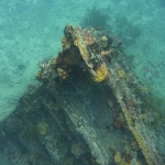 Snorkel_Purina_05.JPG