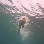 Snorkel_Saline_Bay_01.JPG