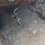Snorkel_Saline_Bay_06.JPG