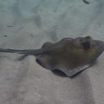 Snorkel_Saline_Bay_08.JPG