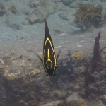 Snorkel_Saline_Bay_09.JPG