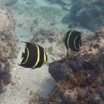 Snorkel_Saline_Bay_10.JPG