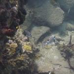 Snorkel_Saline_Bay_12.JPG