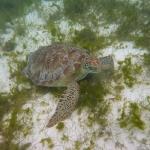 Snorkel_Tobago_03.JPG