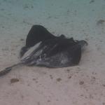 Snorkel_Tobago_06.JPG
