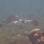 Snorkel_Tobago_08.JPG