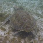 Snorkel_Tobago_10.JPG