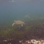 Snorkel_Tobago_13.JPG
