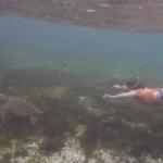 Snorkel_Tobago_14.JPG