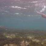 Snorkel_Tobago_15.JPG