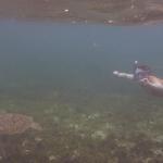 Snorkel_Tobago_16.JPG
